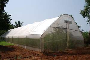 Outside of Dream Greenhouse