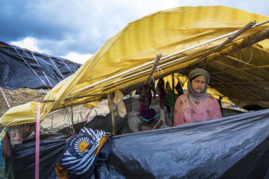 Senowara's Shelter