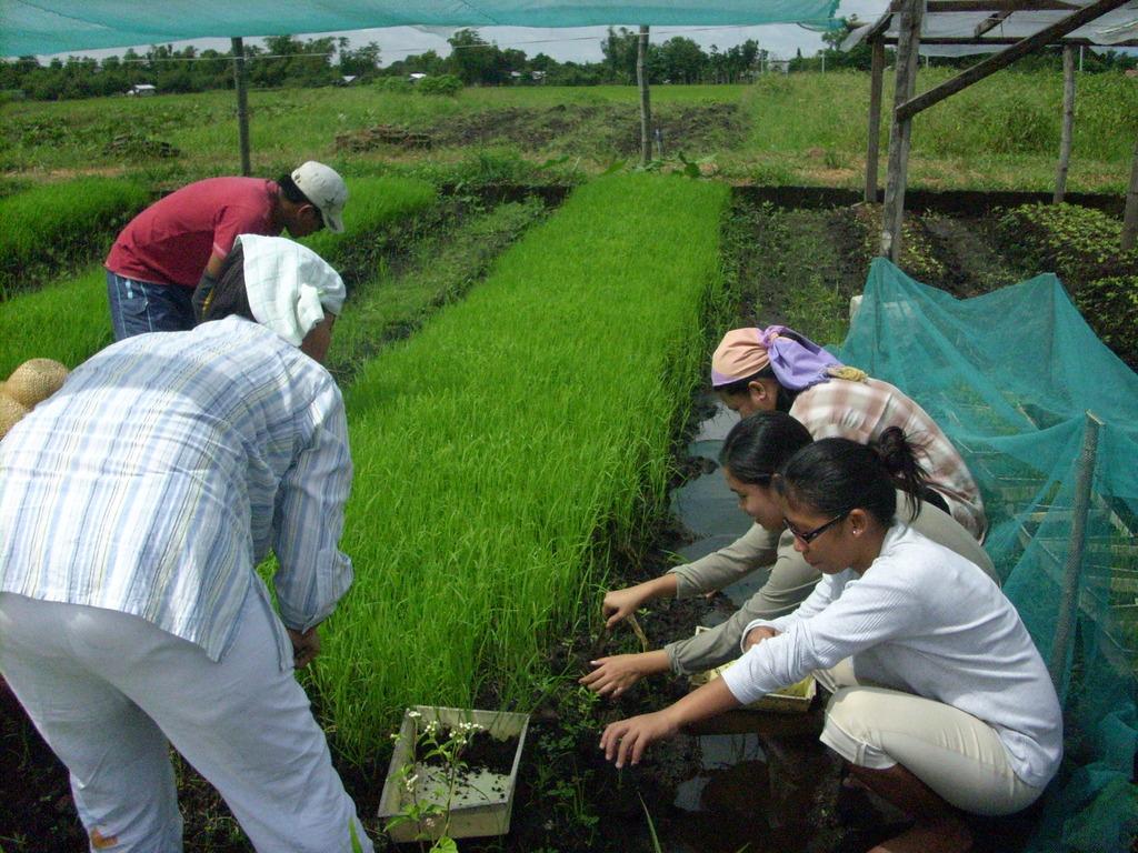 Organic Rice Production Training