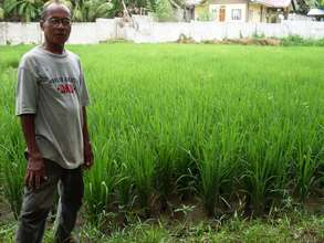 Domingo Bayutlang, Filipino farmer cooperator