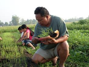 Farmers' Training on Organic Rice Production