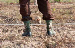A Landmine Detection Rat (photo Allan Staley)