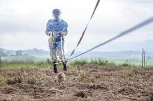 Jumanne the Landmine Detection Rat and her trainer