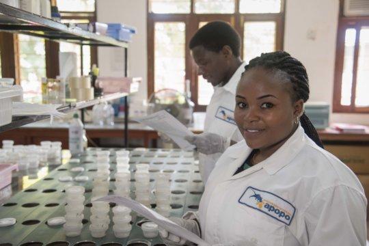 APOPO colleague Marygiven preparing sputum samples