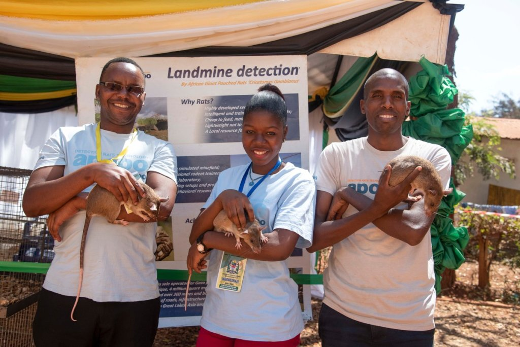 APOPO staff show off HeroRATs at agriculture shows