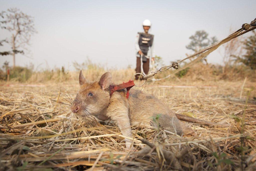 Cambodian HeroRAT