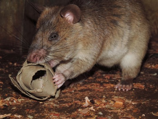 Toys motivate the animals to forage for food
