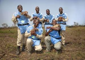 The Angolan HeroRATs with their handlers.