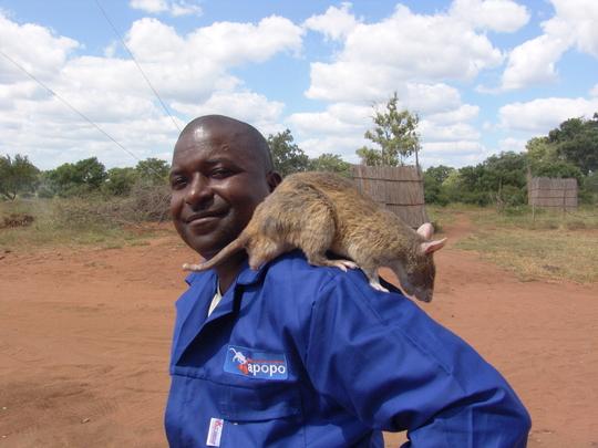 Handler Usseni Ussi, with rat Garvey