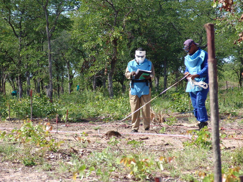 Mine Detection Rats & handlers, Mozambique