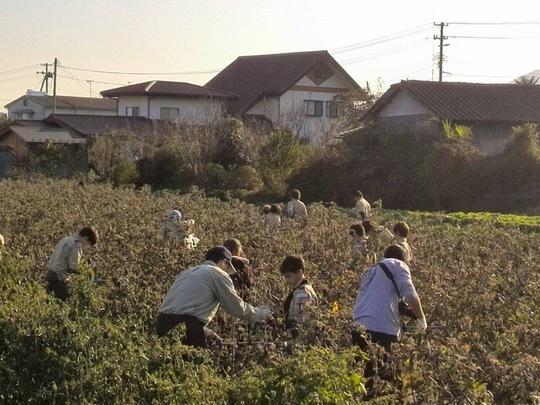 Volunteers helping local farmers