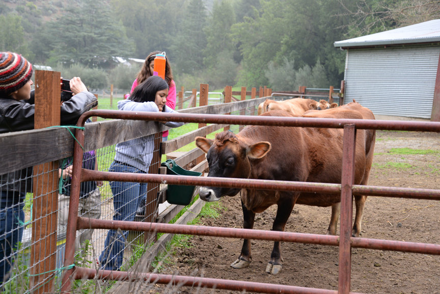DCP students visit with Vida the cow