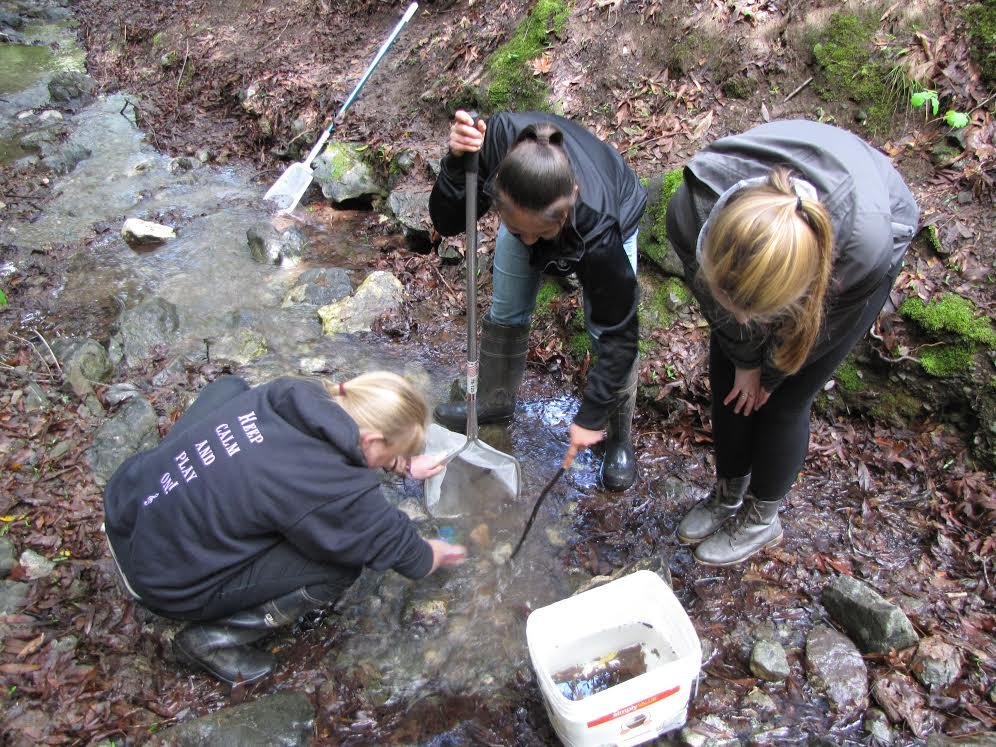 Environmental Science in the Creek