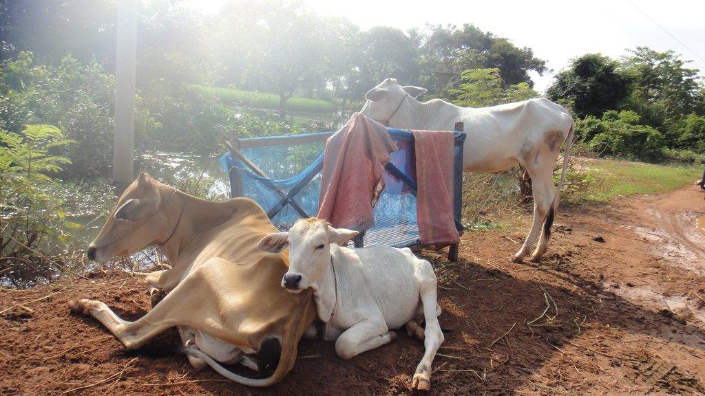 Stranded Livestock