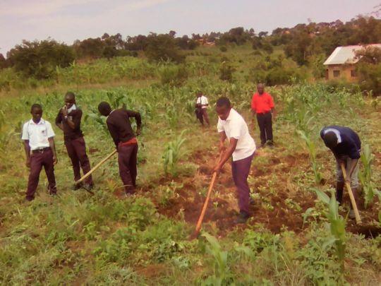 Matale students working in school garden