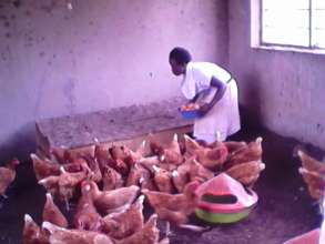 Students Feeding Chickens