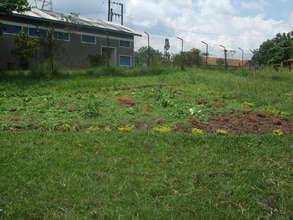 Garden on Matale campus