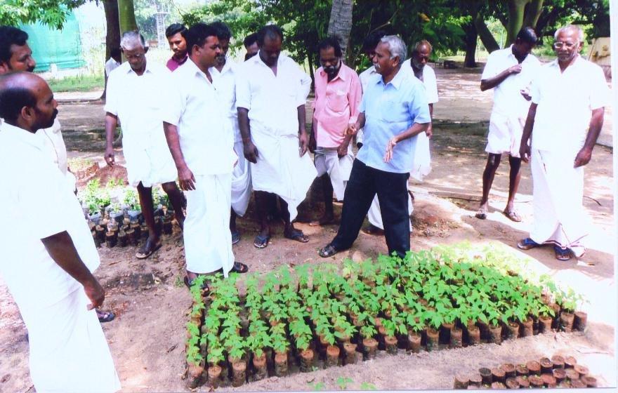 OFFICIALS EXPLAINED PLANTATION TECHNIQUES