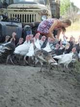 Poultry Venture in Moldova