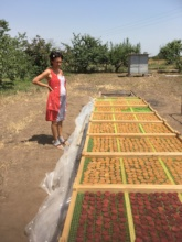 Dried Fruit Producer in Armenia