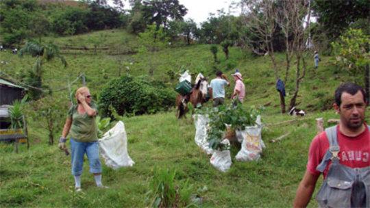 Planting day in Rio Piedras, 2009