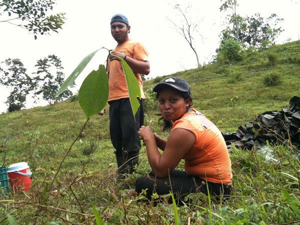 Alan Hernandez and Irma Acosta, planters