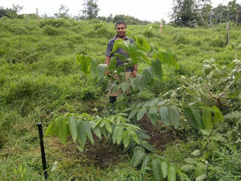Tree development since planting, December 2011