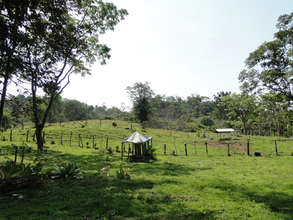 14 hectares pasture