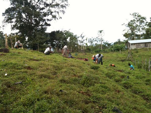 Planting remaining 14 ha of pastureland