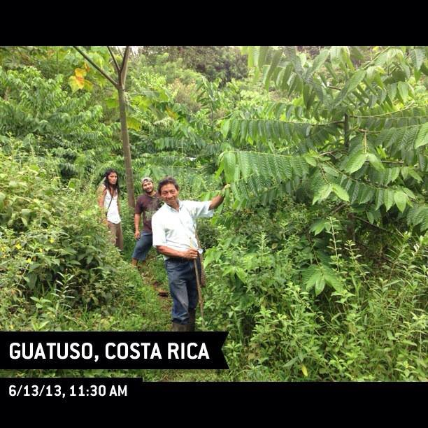 Ylang Ylang that we planted in December 2011
