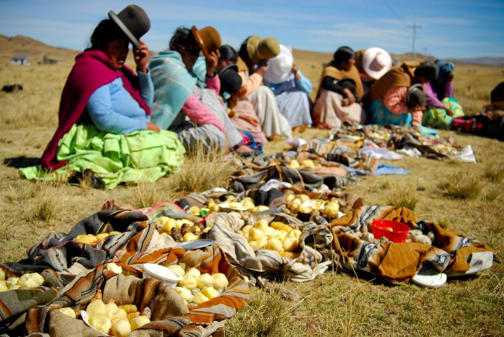 This photo displays the staple of the Altiplano diet and also an Aymara tradition called aptapi, sharing food together when gathered. These woman are recipients of a community irrigation and water system; this vital development aims to improve health, provide food and generate income. Elle Masri