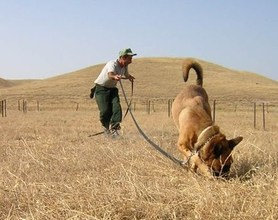 "MDD Danik ""sniffing out"" landmines in Azerbaijan"