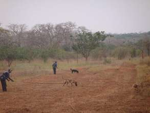 MDDs at work, searching for landmines in Angola