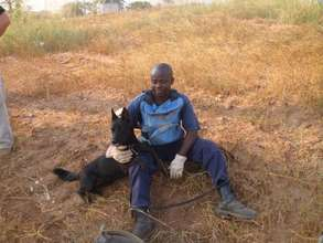 MDD Kuito resting with her handler in Angola