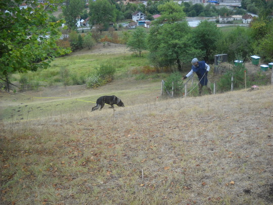 """MDD Charlie """"sniffing out"""" mines in Olovo"""