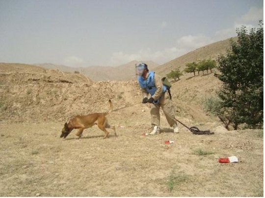 """MDD Stryker """"sniffs out"""" mines in Afghanistan"""