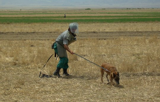 Searching for mines in Azerbaijan