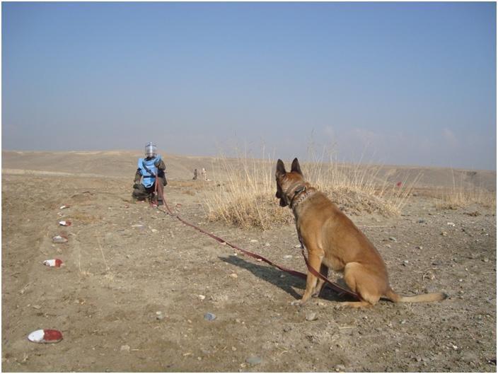 MDD Stryker locates a landmine