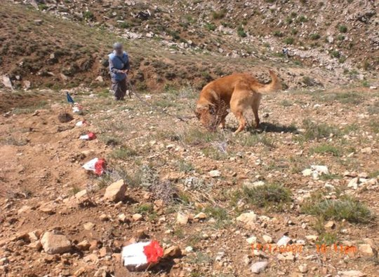 MDD Toby locating mines in Afghanistan