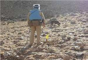 MDD Country searching for landmines