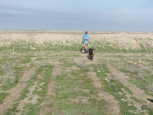 MDD Team working in a mine-field near Basra