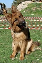 """Train Dogs to """"Sniff Out"""" Landmines & Save Lives"""