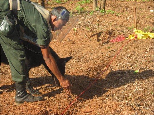 Mine Detection Dog in Sri Lanka