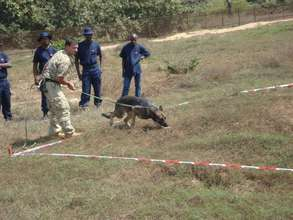 "MDD Arizona ""sniffing out"" landmines in Angola"