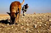 "Train Dogs to ""Sniff Out"" Landmines & Save Lives"