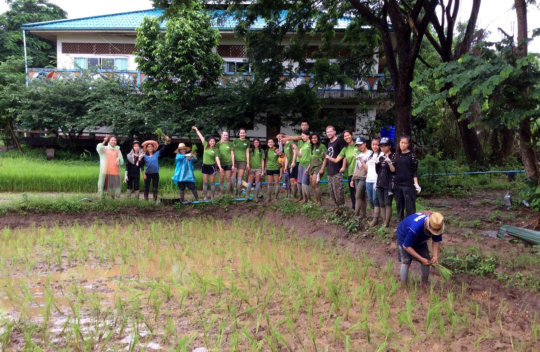ISV volunteers helping to replant rice saplings