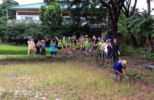 ISV volunteers helping to replant rice saplings
