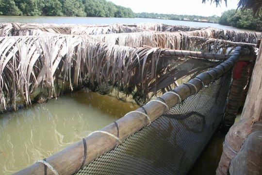 Aquaculture in the Sarstun River