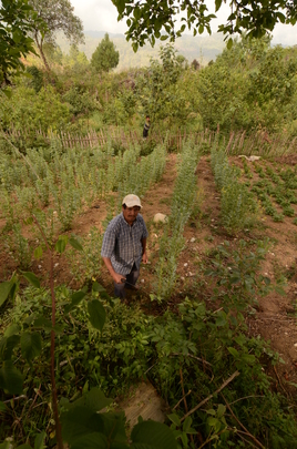 A farmer showing off his agroforestry plot.