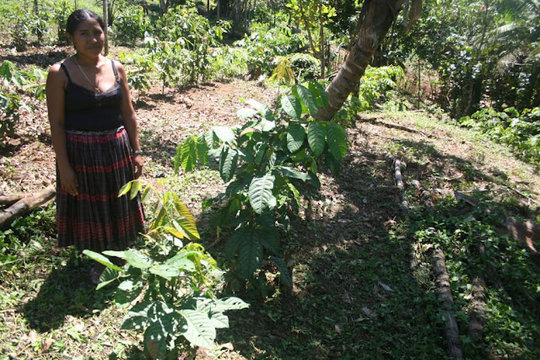 A farmer standing proudly by her agroforestry plot